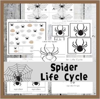 spider life cycle worksheets