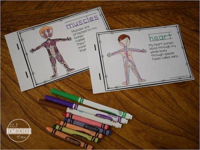 the human body printable for preschool, prek, kindergarten, first grade, 2nd grade, 3rd grade