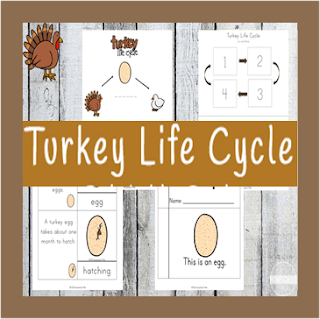 turkey life cycle