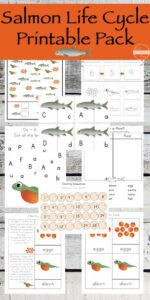 FREE Life Cycle of Salmon Worksheets for preschool, prek, kindergarten, first grade, 2nd grade, and 3rd grade students including not only life cycle information, but uppercase / lowercase salmon matching puzzles, salmon counting, letter find, and so much more! 67 pages!!! LOW PREP! #lifecycle #science #kindergarten