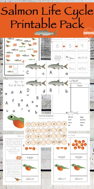 Whether you are studying the Life Cycle of Salmon specifically, learning about animal life cycles, or are just looking for a fun science activity for your fish theme, thissalmon life cycle worksheet pack is perfect! This salmon life cycle for kids is perfect for preschool, pre-k, kindergarten, first grade, and 2nd graders. Not only will kids learn about with thefish life cycle worksheet, but they will get a chance to work on math and literacy skills too. Simply download pdf file withlife cycle of a salmon worksheetpack and you are ready to learn withsalmon activities.