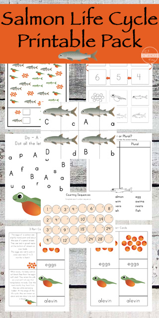 FREE Salmon Life Cycle Worksheets for preschool, prek, kindergarten, first grade, 2nd grade, and 3rd grade students including not only life cycle information, but uppercase / lowercase salmon matching puzzles, salmon counting, letter find, and so much more! 67 pages!!! LOW PREP!