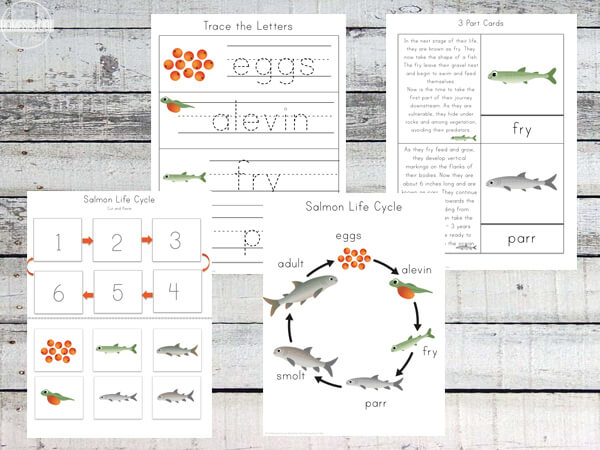 Salmon-Life-Cycle-Science-Worksheets-for-first-grade-2nd-grde-3rd-grade