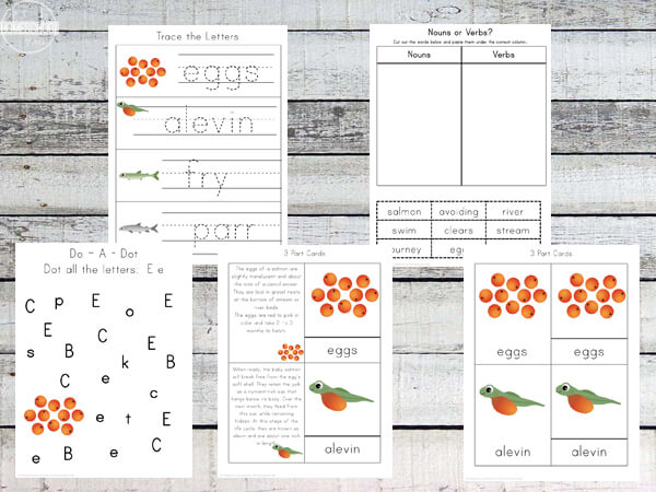 Salmon-Life-Cycle-worksheets-for-kids