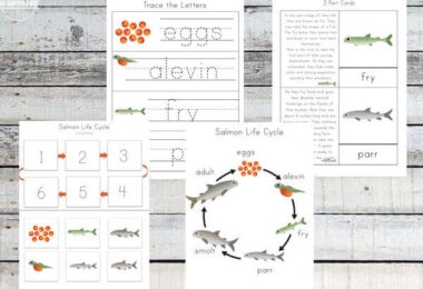Salmon-Life-Cycle-Worksheets
