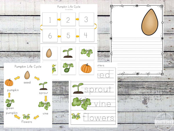 graphic regarding Pumpkin Life Cycle Printable named Pumpkin Lifestyle Cycle Worksheets (Prek-3rd) 123 Homeschool 4 Me