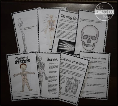 Elementary Skeletal System Worksheet - learn about the human body in homeschool