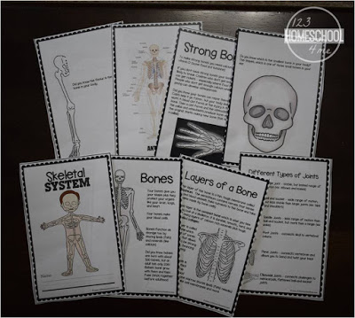 Skeletal System bookf or kids to learn about the human body in homeschool