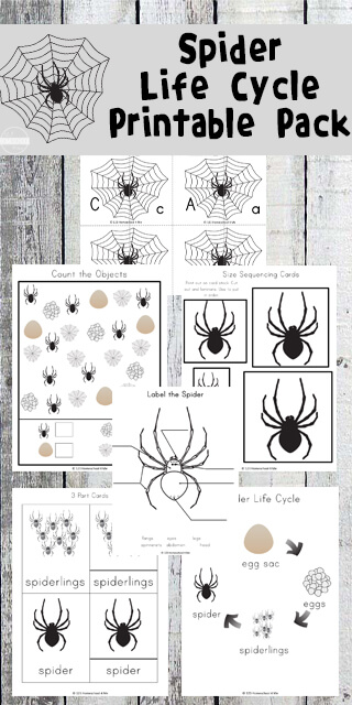 Spiders are interesting little creatures that help keep the bug population in check. Whether you want to study spiders as part of an insect theme, help your child avoid a fear of spiders or are looking for a creepy crawly free worksheets for October, this HUGE life cycle of a spider worksheet pack is just what you are looking for. These free spider life cycle pages include math, literacy, and science for preschool, pre k, kindergarten, and first grade students.