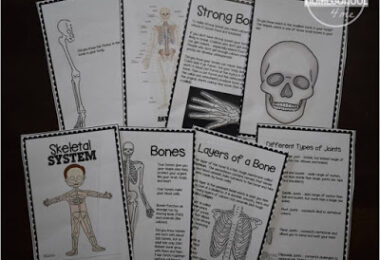 Skeletal-System-Worksheets-Kids