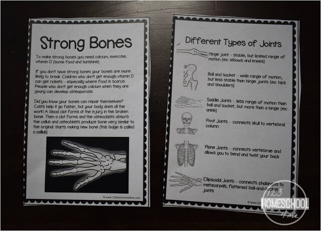 learning about bones for kids