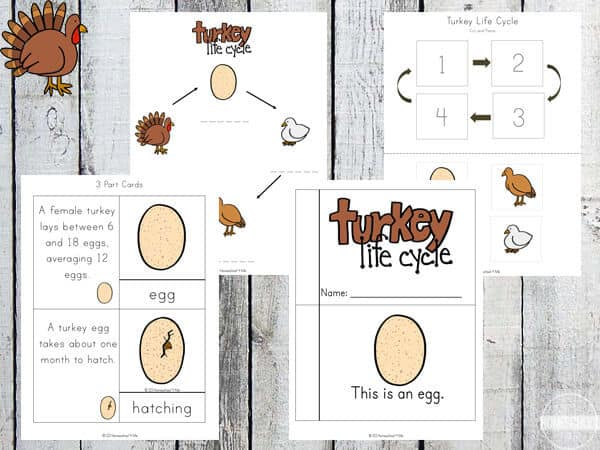 Life Cycle of a Turkey Worksheet