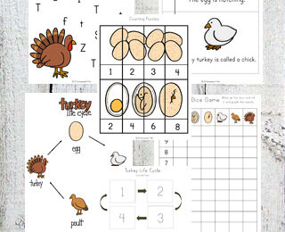 Life Cycle of a Turkey