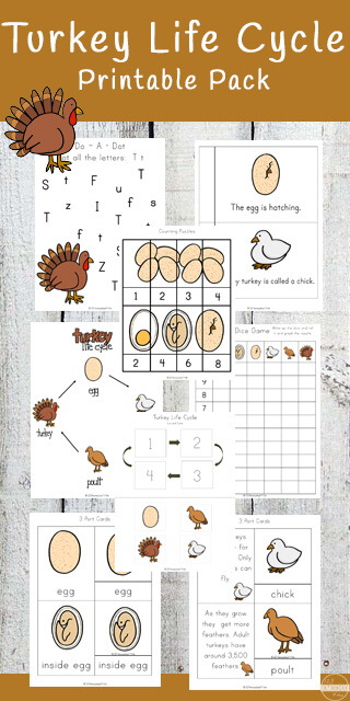 Help children learn about a turkey life cycle with this HUGE 74+ page, free printable life cycle of a turkey worksheet pack! Your toddler, preschool, pre-k, kindergarten, first grade, 2nd grade, 3rd grade, and 4th grade student will learn about the life cycle of a turkey, key science terms / vocabulary, make a science reader, and practice math & literacy skills at the same time! This turkey theme is perfect for learning with life cycle worksheets in November for a Thanksgiving theme.