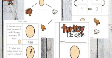 Turkey-Life-Cycle-Printable-Pack