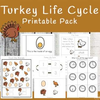 turkey life cycle free printable