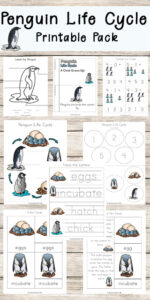 penguin life cycle worksheet