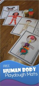 FREE Human Body Playdough Mats - These are such a fun hands on educational activity for kids learning about the human body, skeletal system, muscular system, human body organs, and more. Print in color or black and white and use for homeschool, science projects for kids, preschool, prek, kindergarten, first grade, 2nd grade, 3rd grade, 4th grade, 5th grade, 6th grade, and more! (kids activities, human body activities) #humanbody #playdoughmats #scienceforkids