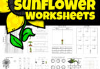 One of my favorite things about summer are all the pretty flowers growing everywhere. And no flower stands out like the tall, cheery sunflower! Learn about flower life cycles in this life cycle of a sunflower worksheet pack with over 65 pages! Not only are theresunflower life cycle worksheet choices, but sunflower worksheets to practice math, and liteary skills such as alphabet matching, tracing letters, counting, subtracting, singular / plural, graphing, telling time, and so much more with preschool, pre-k, kindergarten, and first grade students. Simply download pdf file with flower worksheets and you are ready to play and learn with theselife cycle worksheets.