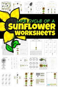 One of my favorite things about summer are all the pretty flowers growing everywhere. And no flower stands out like the tall, cheery sunflower! Learn about flower life cycles in this life cycle of a sunflower worksheet pack with over 65 pages! Not only are theresunflower life cycle worksheet choices, but sunflower worksheets to practice math, and liteary skills such as alphabet matching, tracing letters, counting, subtracting, singular / plural, graphing, telling time, and so much more with preschool, pre-k, kindergarten, and first grade students. Simply print pdf file with flower worksheets and you are ready to play and learn with theselife cycle worksheets.