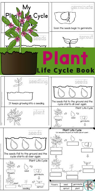 Plant Life Cycles for kids