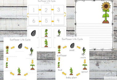 Sunflower-Life-Cycle-Printable-Pack