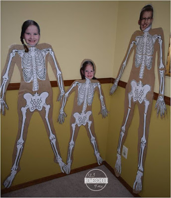 Skeletal System science project