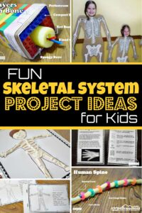 Kids will have fun learning about the skeletal system for kids with these fun, hands-on skeletal system project ideas for preschool, pre-k, kindergarten, first grade, 2nd grade, 3rd grade, 4th grade, 5th grade, and 6th graders. From Lego brick skeletal system activities and candy skeletal system, to Playdough skeletal system and skeletal system printables - we have lots of creative skeletal system project ideas.