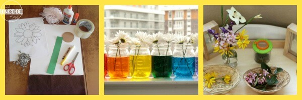 Flower Science Experiments