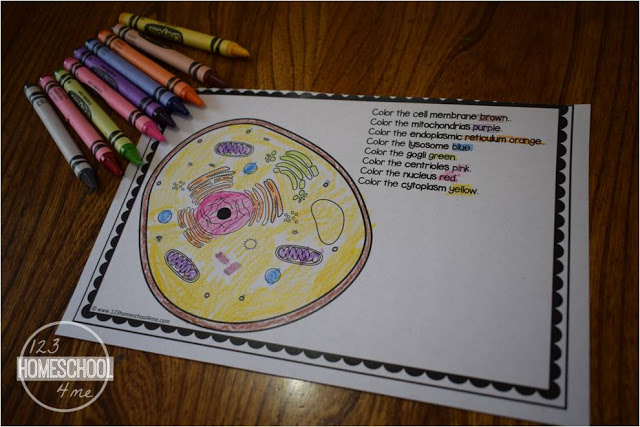 animal cells worksheets for kids, homeschool, science
