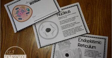 Human Cells Reader for Kids