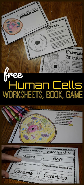 Make learning about cells for kids fun and memorable with these human cell worksheet, all about cells review game, how to make a dna model with edible cell model, and so much more! These human body activities are fun for kindergarten, first grade, 2nd grade, 3rd grade, 4th grade, 5th grade, and 6th graders.