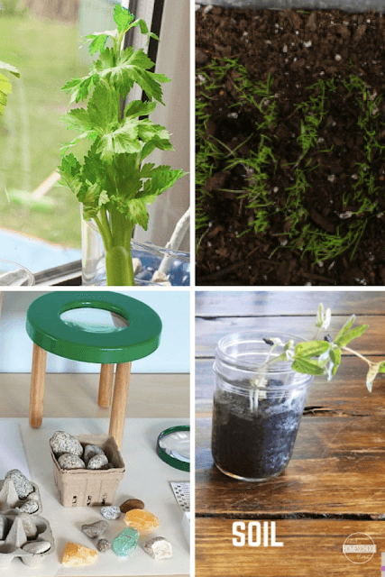 plant-science-experiments