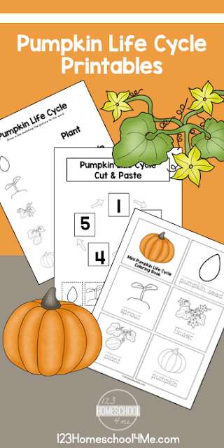 Free Life Cycle of a Pumpkin Printables - kids can learn about pumpkin life cycle vocabulary, practice sequencing, and more with these free printables for preschool, kindergarten, first grade, 2nd grade #pumpkin #lifecycle #free #kindergarten #1stgrade #123homeschool4me