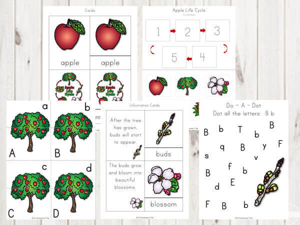 image about Apple Life Cycle Printable identified as Cost-free Apple Lifestyle Cycle Printable Pack 123 Homeschool 4 Me