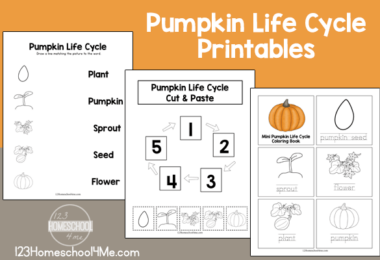 Free Life Cycle of a Pumpkin Printables