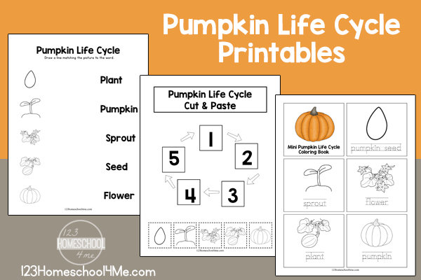 photograph regarding Pumpkin Life Cycle Printable identified as No cost Everyday living Cycle of a Pumpkin Printables 123 Homeschool 4 Me