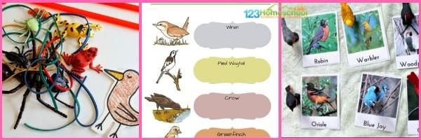 BIRD THEME SCIENCE