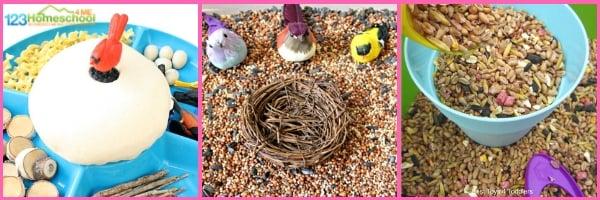 BIRD THEME Social Studies