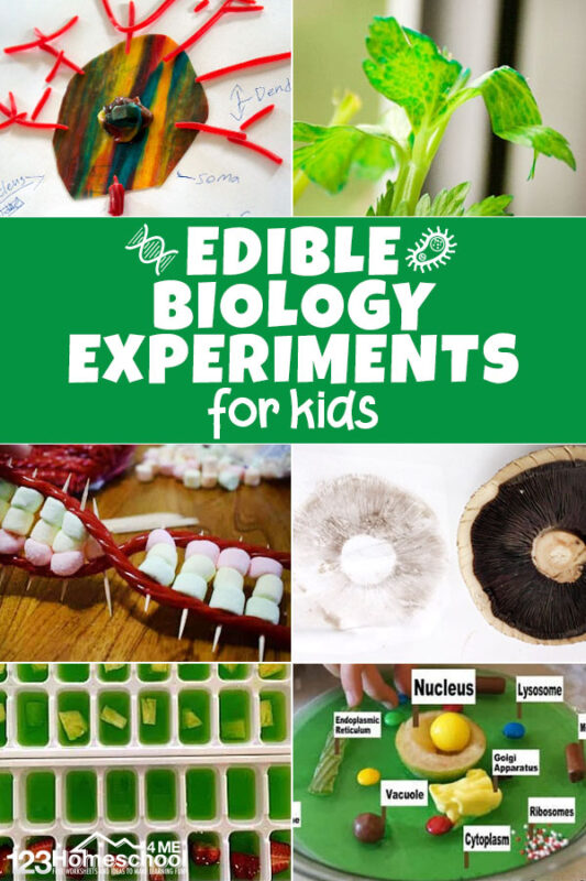 Tons of super clever and unique biology experiments you can make with food!