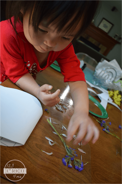 have-children-place-flowers-flower-petals-on-cut-to-plate-size-self-laminating-pouches