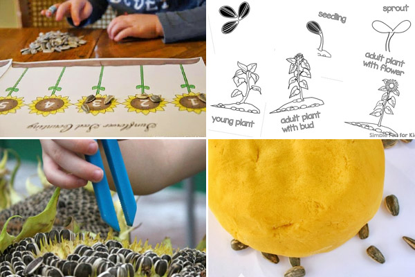 kids will have fun learning and playing with these sunflower activities