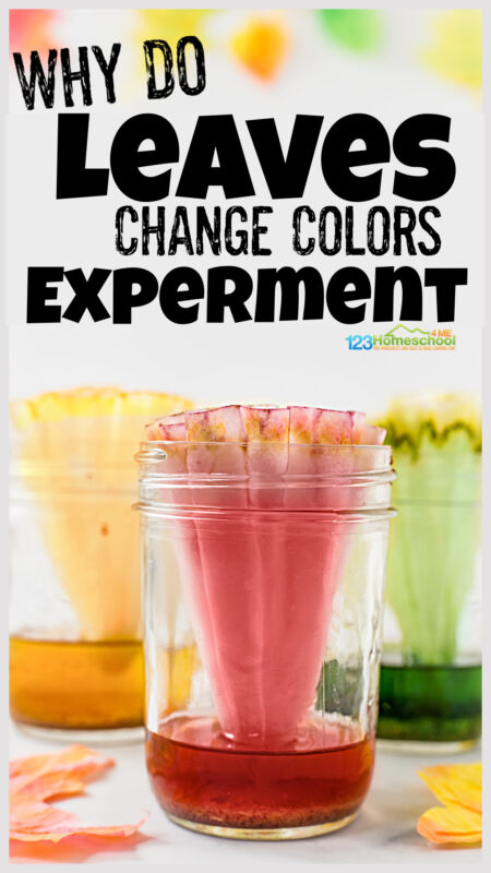 Kids will be WOWED with this hands-on, fall science experiment where they will learn about chromatography for kids in this Why do Leaves Change Color Experiment. This why do leaves change color for kids is such a fun leaf activity that preschool, pre-k, kindergarten, first grade, 2nd grade, 3rd grade, 4th grade, and 5th grade students will enjoy. This leaf science is the perfect EASY science experiment for September, October, and November.
