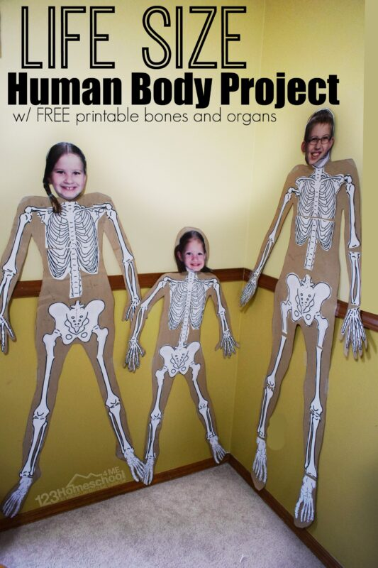 kids will have learning about the 206 bones in their body with this fun science projects for kids of all ages
