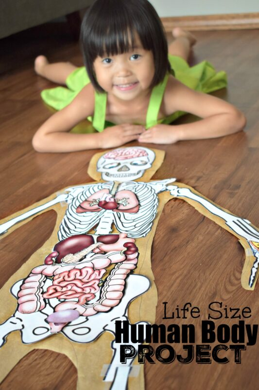 this is such a fun kids activity to learn about the human body for kids