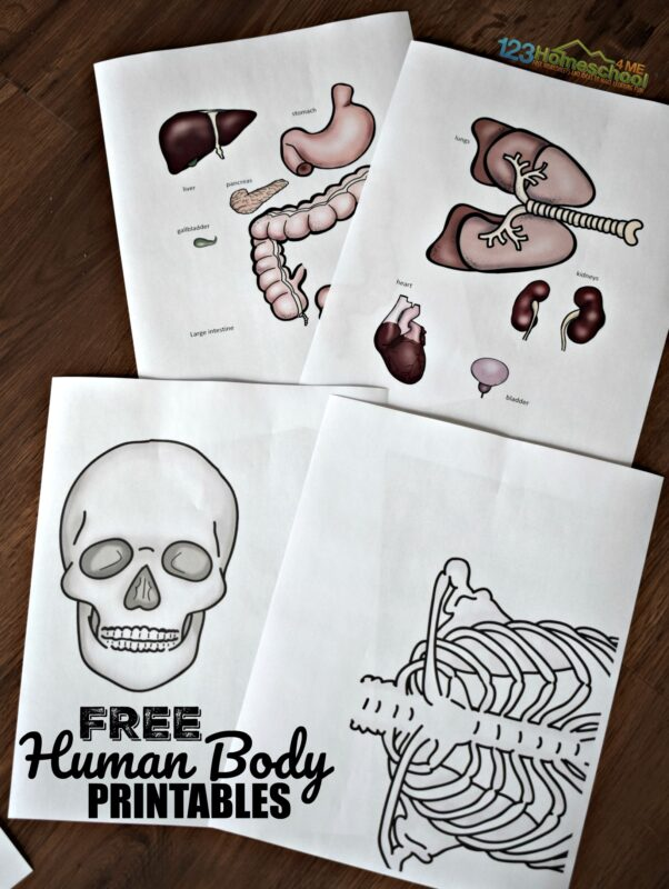 free human body printables for anatomy and biology science for homeschooling