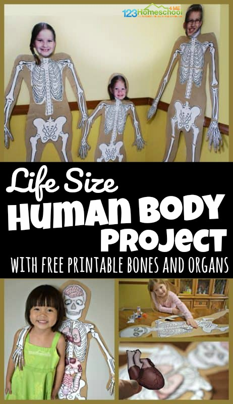 Help kids learn about what is under their skin with this fun, interactive, and hands on human body project for kids from toddler, preschool, pre k, kindergarten, first grade, 2nd grade, 3rd grade, 4th grade, 5th grade, and 6th grade students. This can be a simple life size human body project or use our free printable templates to add bones of the body, organ templates, and more. This engaging science project is EASY and LOW PREP too.