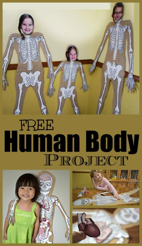 FREE Human Body Project - such a fun hands on kids activity for kids to learn about my body and what is inside - bones of skeletal system and major organs of the body for a fun science activity for kids from preschool, kindergarten first grade and elementary age kids #humanbody #science #homeschool