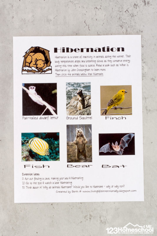 hibernation activities for kindergarten