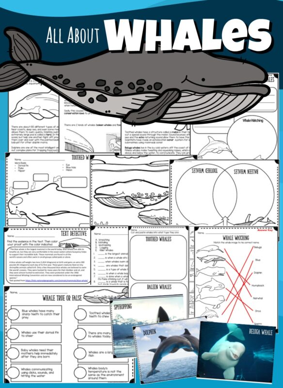 Kids will have fun learning ALL ABOUT WHALES with this printable unit filled with information, worksheets, pritnables, coloring pages, flashcards, answer key, tests, and more